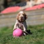 Malý fotbalista (1 měsíc)