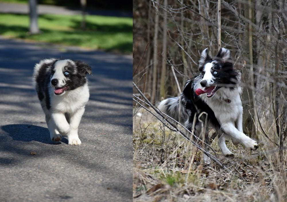 2 měsíce vs. 10 měsíců