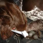 Simon s kartáčkem i spí