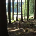 Simon v lese