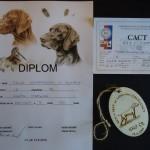 Diplom, CACT kartička a číslo
