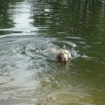 Instík ve vodě