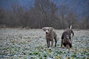 Zimní pastva