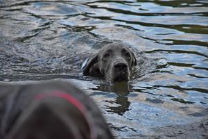 Ve vodě, kde to miluje