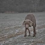 Zimní pole